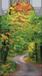 Mágneses könyvjelző erdei út