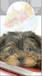 Mágneses könyvjelző kutya