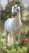 Mágneses könyvjelző ló